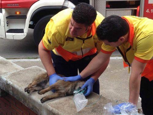 Ambulancias para animales