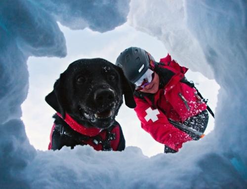 Perros de rescate en aludes